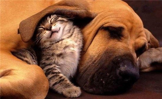A dog and kitten sleeping together